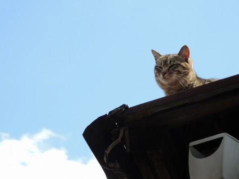 ネコは見ていた